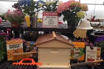 Bee display.jpg