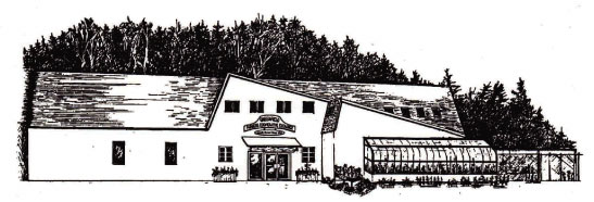 store-front-pen-and-ink