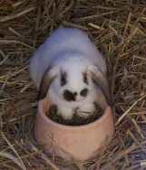 cuddly bunnies?