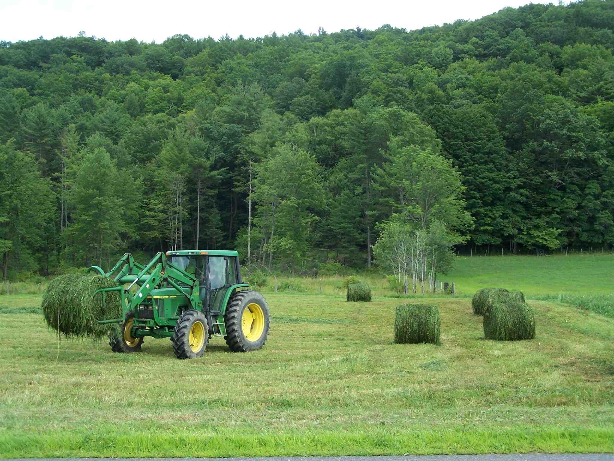 Find hay greenfield farmers cooperative exchange for Greenfield farm