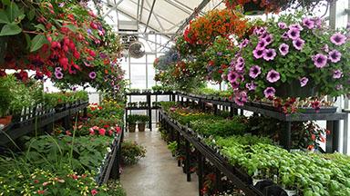 greenhouse inside.jpg