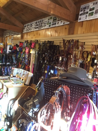 Halters, hats and more!