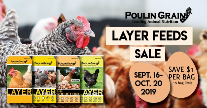 layer pellet sale - Made with PosterMyWall